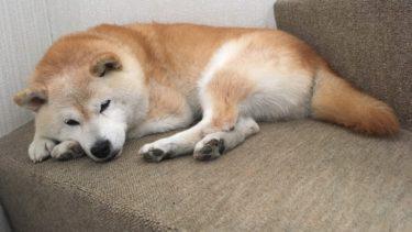 愛犬と暮らす幸せ、愛犬ランとかれこれ16年
